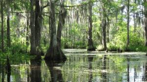 the-bayou